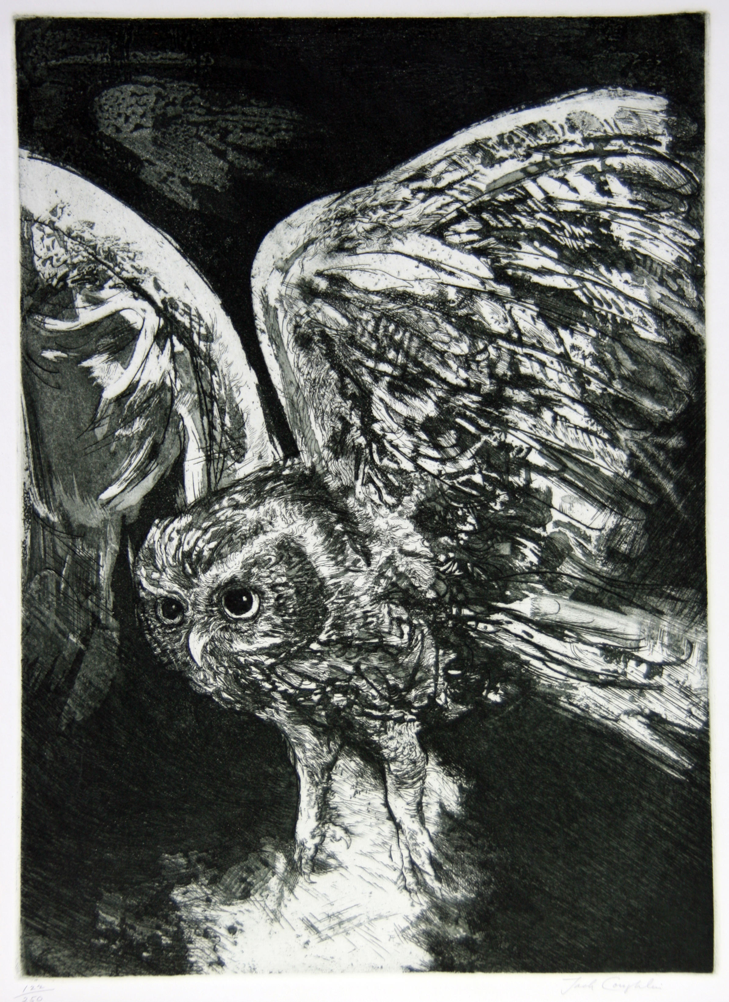 1981.015 |  Jack Coughlin | OWL IN FLIGHT | etching on paper | 15.5 x 11.25"