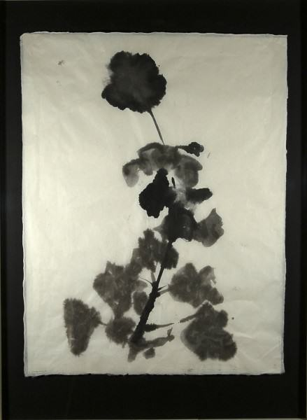 21. Geranium with Large Bloom 25 x 17 2014