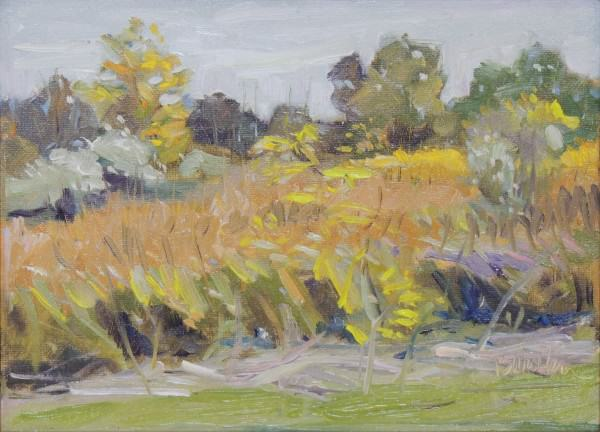 "Barb Walker | PRAIRIE AT QUAIL HOLLOW | oil | 9 x 12"" frameless"