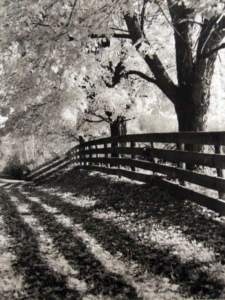 Steve Card | SHADED WALK | photograph
