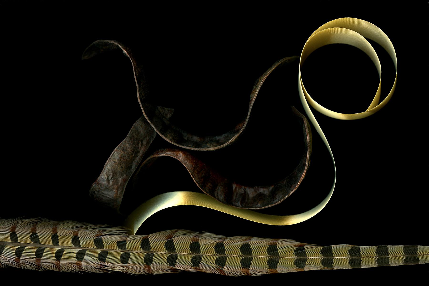 "Doug McLarty   RIBBON & PODS   scanography   30 x 35""   2006"