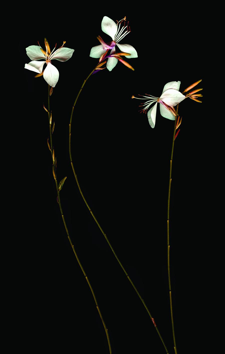 """Doug McLarty   SUNRISE   scanography   18 x 24""""   2006"""