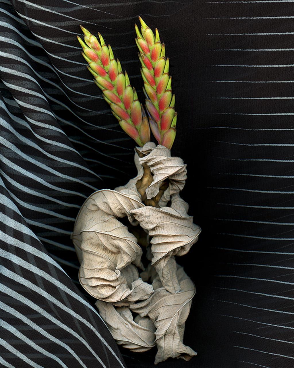 "Doug McLarty   DAKOTA GRASS DANCE   scanography   22 x 28""   2014"