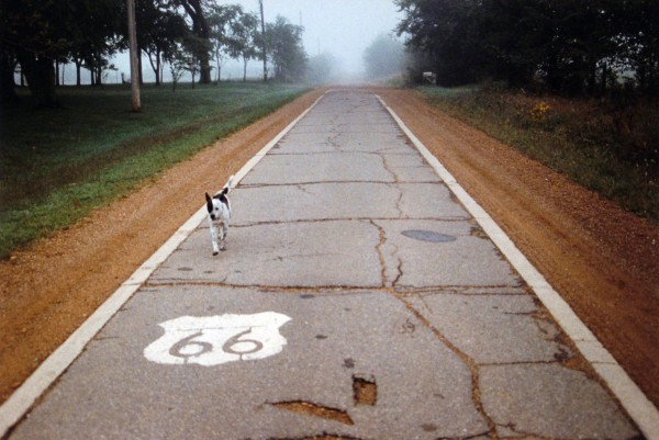 Shellee Graham | DOG ON ROUTE 66