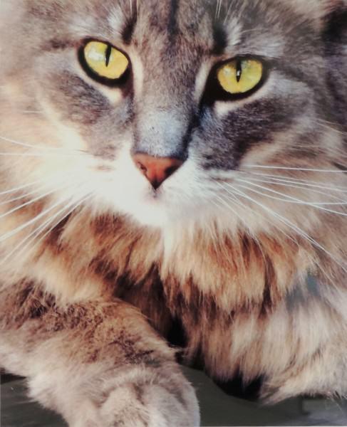 Harold Shelley | CAT EYES | photography