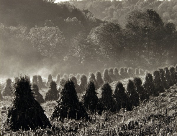 Stephen Carl   HARVEST MIST   photography