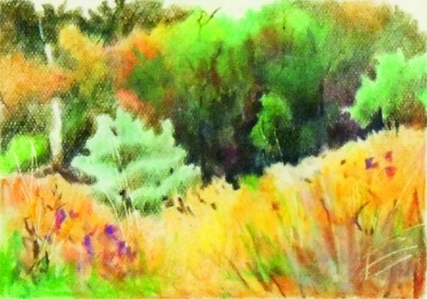 Jane Johnson | GORMAN NATURE CENTER | colored pencil | 3 x 4.5""