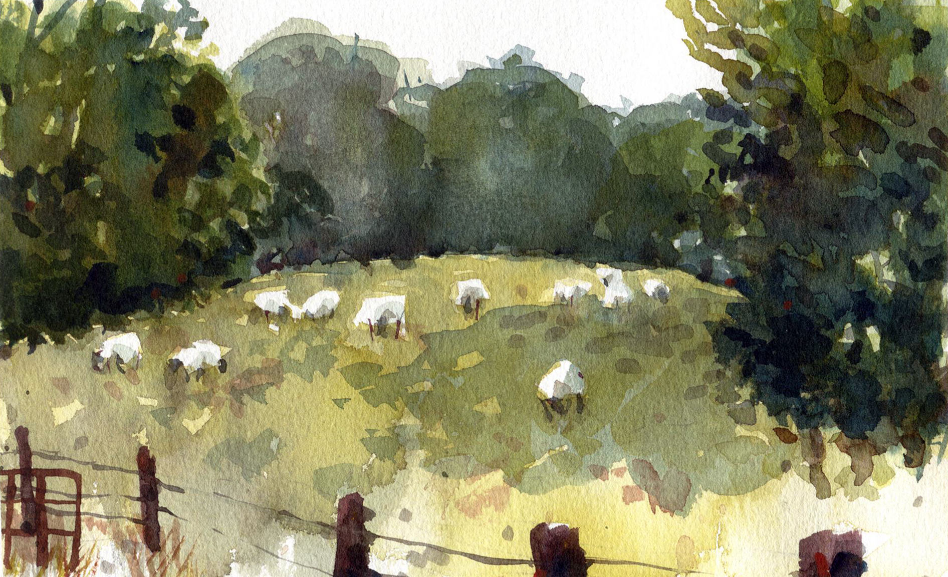 Jeff Stahler | GRAZING SHEEP | watercolor | 7 x 10