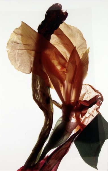 Julia K. McLemore | UNTITLED (IRIS ET AL) | photograph | 2005-6