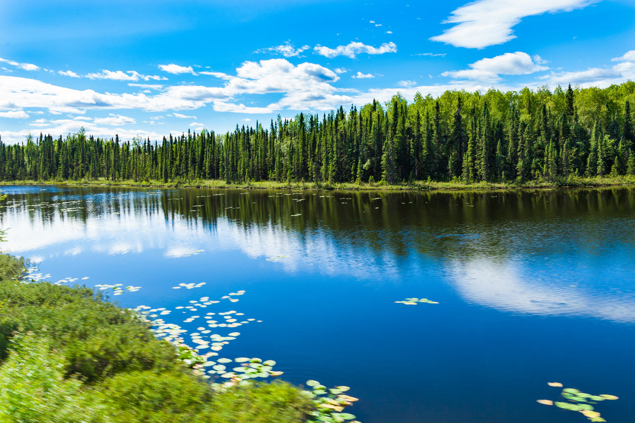 Marcus W. Evans | TAIGA FOREST BY THE LAKE | Photograph