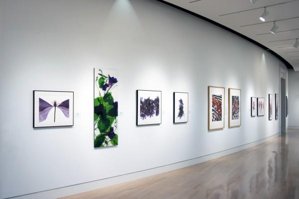 Julia K. McLemore | New Botanicals