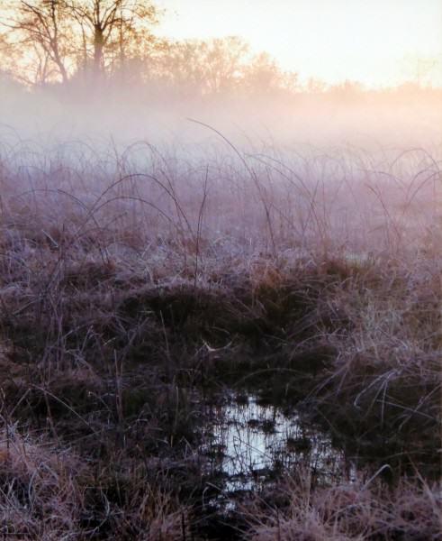 Second Place Amateur Photography | Sue Hammond | FEN MIST